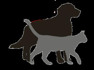 pronto soccorso veterinario bergamo